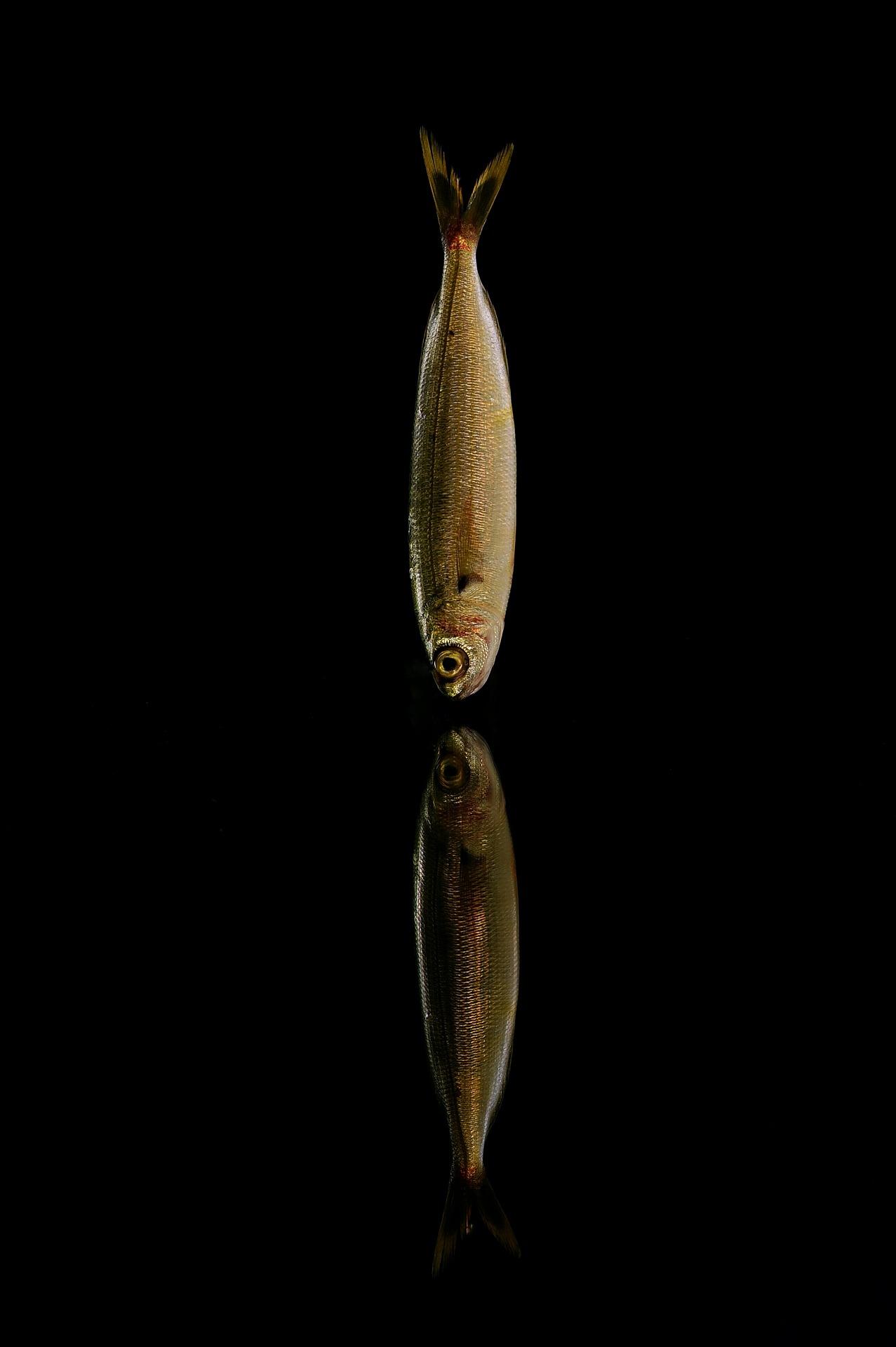 Fischereiordnung Anglerverein Lindena